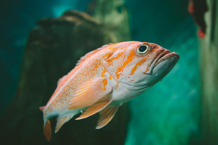 The-Oregon-Coast-Aquarium-Wedding-2.jpg