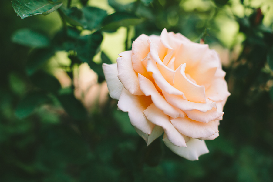 Portland-Rose-Garden-Wedding-Photographs-1.jpg