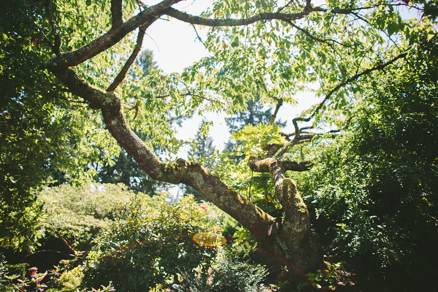 Portland-Rose-Garden-Wedding-Photographs-5.jpg