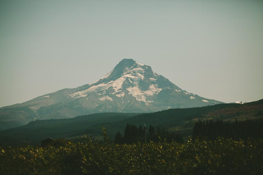 Clarkes-Mountain-Estate-Wedding-27.jpg