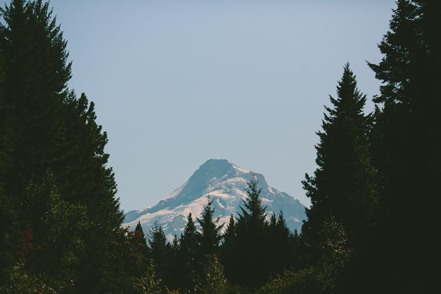 Clarkes-Mountain-Estate-Wedding-33.jpg
