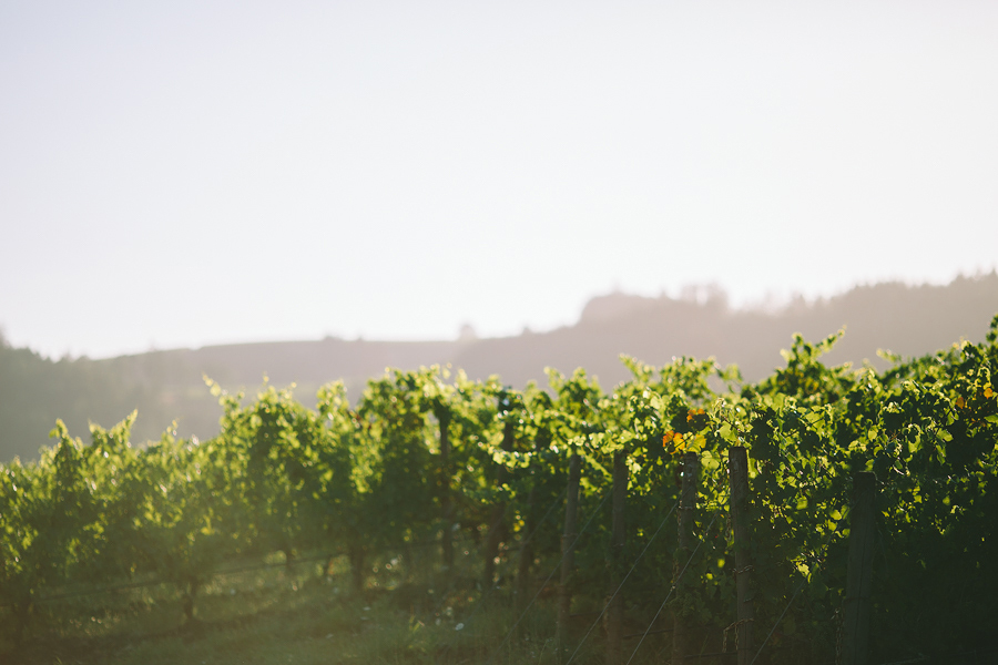 Maysara-Winery-Wedding-7.jpg