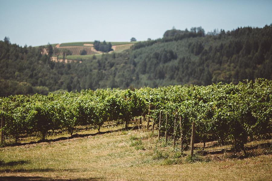 Maysara-Winery-Wedding-Photographs-2.jpg