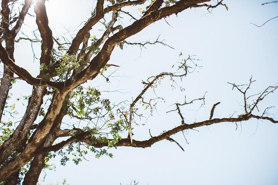 Maysara-Winery-Wedding-Photographs-8.jpg