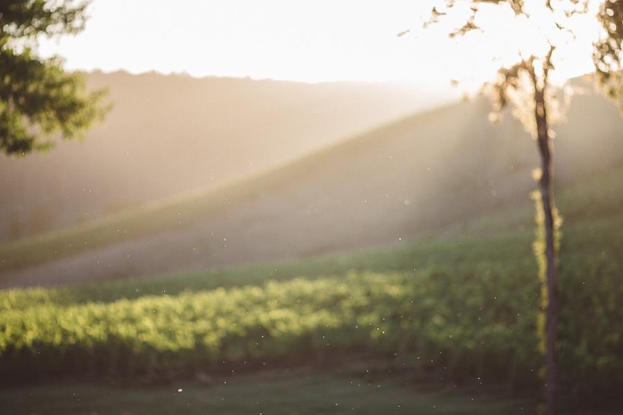 Maysara-Winery-Wedding-Photographs-94.jpg