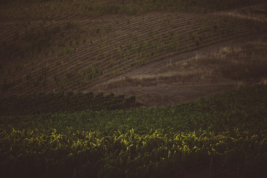 Maysara-Winery-Wedding-Photographs-105.jpg