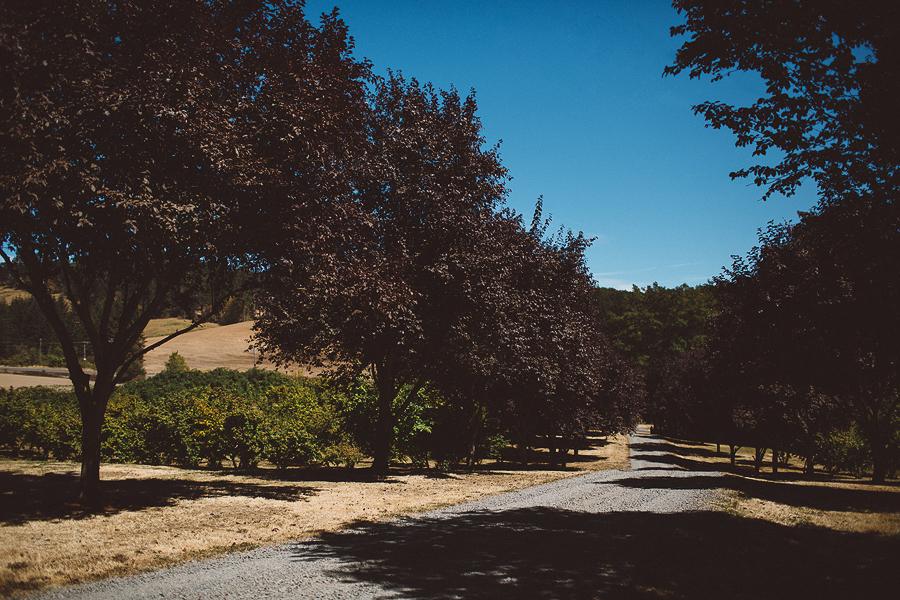 Willamette-Valley-Wedding-Photographs-3.jpg