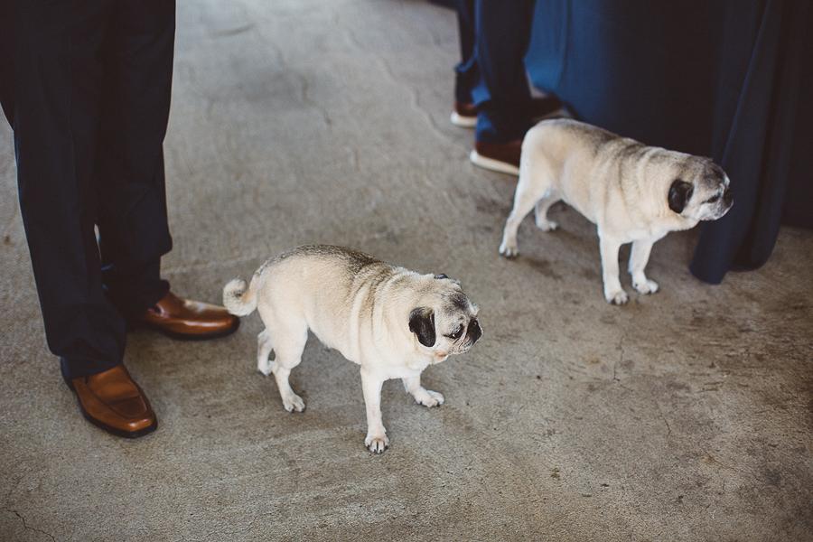Willamette-Valley-Wedding-Photographs-12.jpg