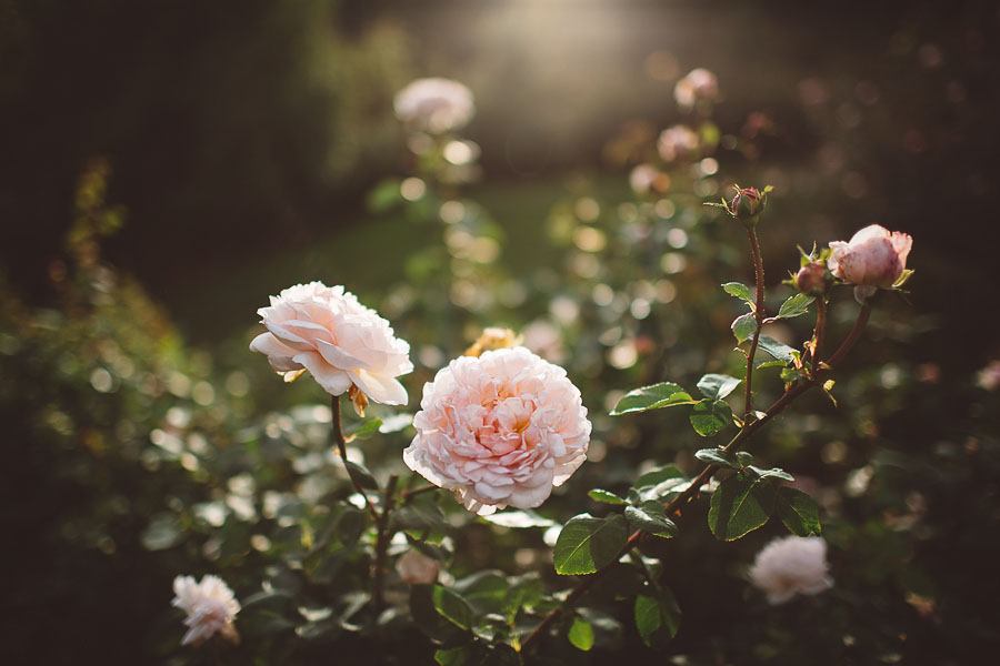 Portland-Rose-Garden-Wedding-51.jpg