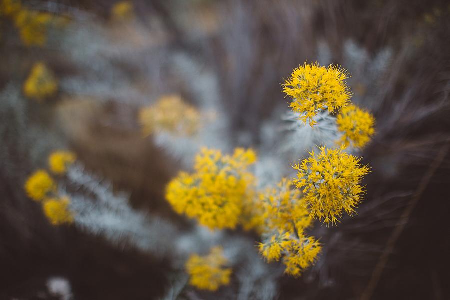 Boise-Engagement-Photos-4.jpg