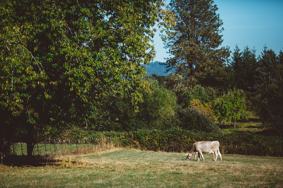 Raw-Dairy-Photographs-004.JPG