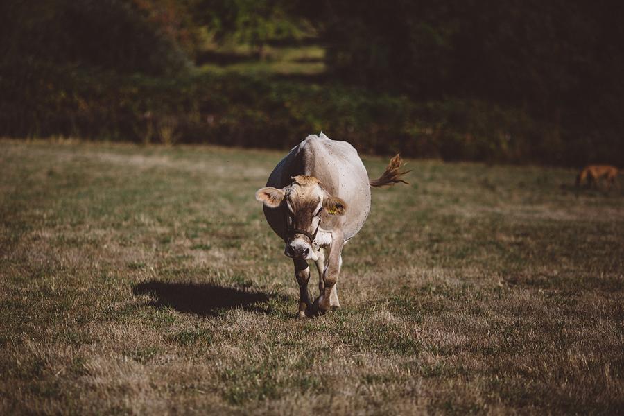 Raw-Dairy-Photographs-015.JPG