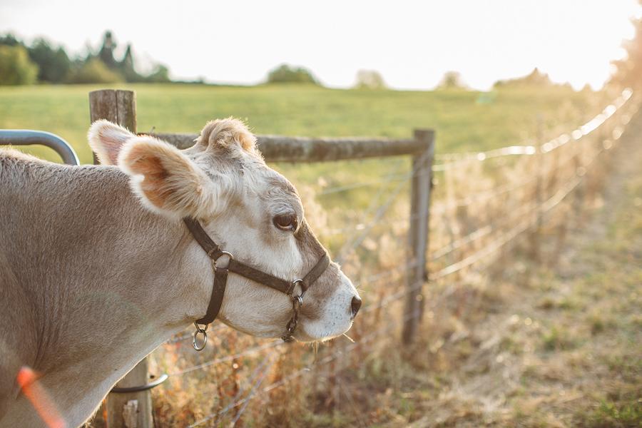 Raw-Dairy-Photographs-051.JPG