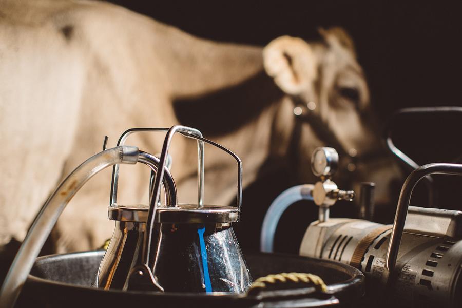Raw-Dairy-Photographs-075.JPG