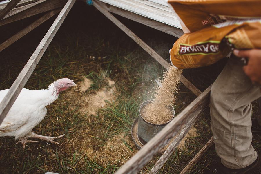 Raw-Dairy-Photographs-090.JPG