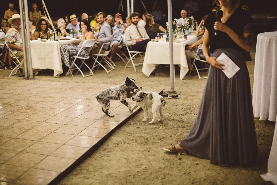 Palisade-Colorado-Wedding-261.JPG