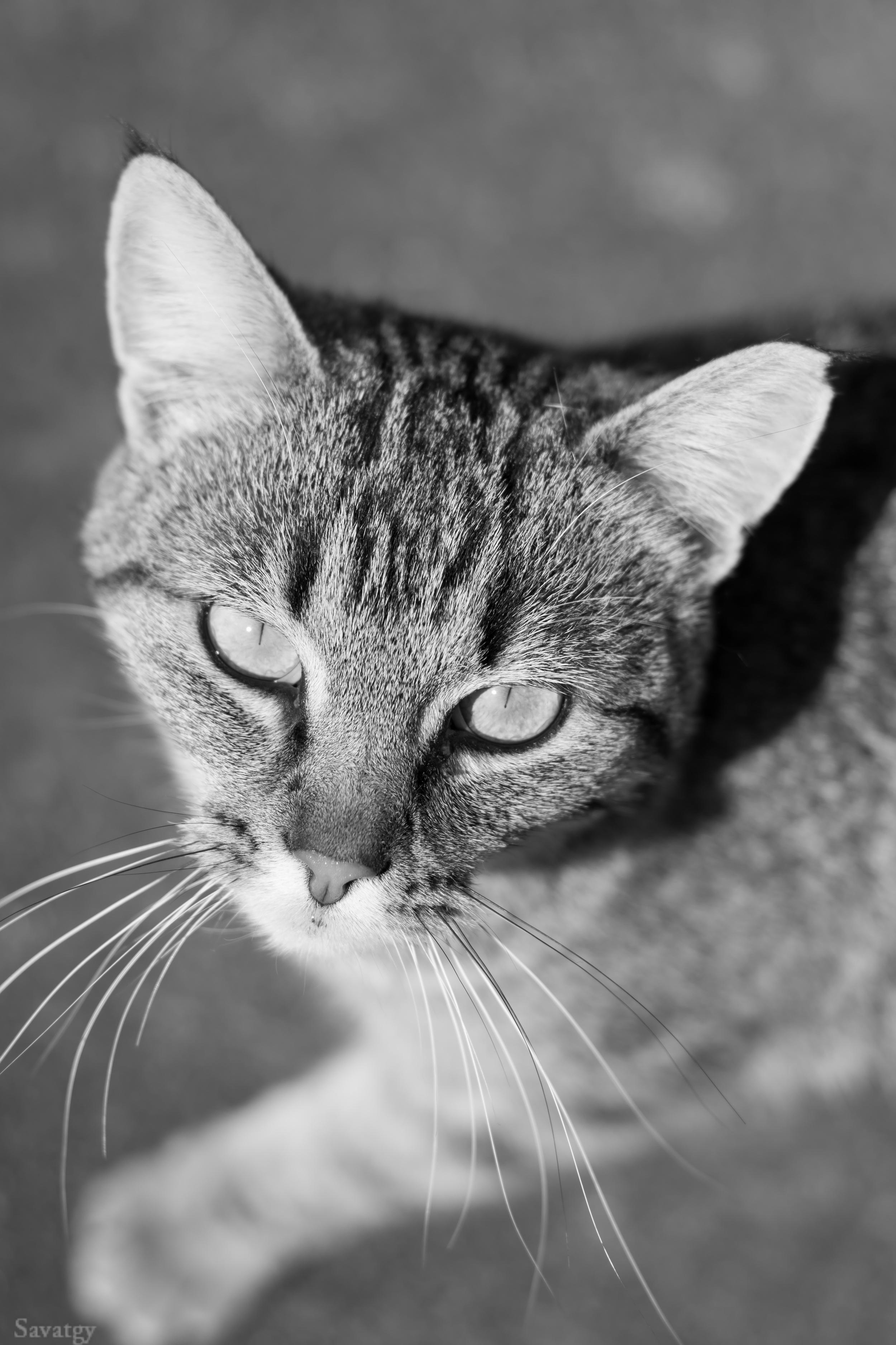 Cat Shoot (4 of 25).jpg