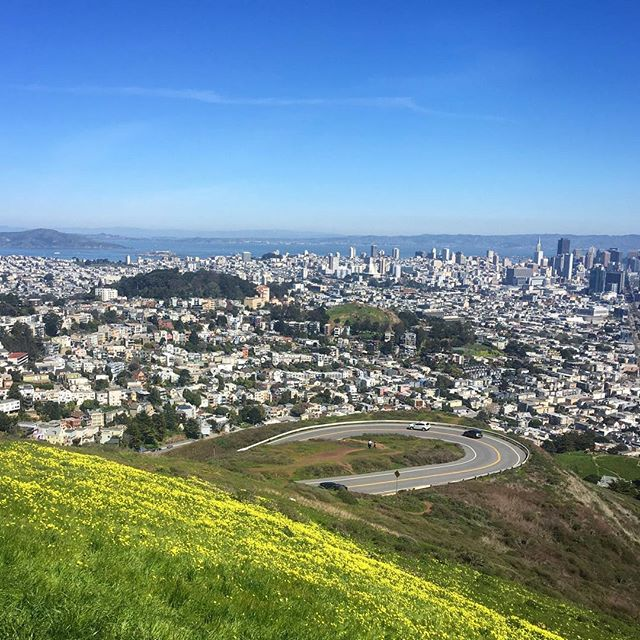 Spring is here! 🌼 #superbloom #sanfrancisco