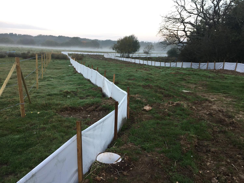 Amphibian mitigation fencing