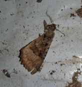 bat feeding remains