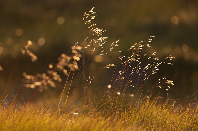 Grassland.jpeg