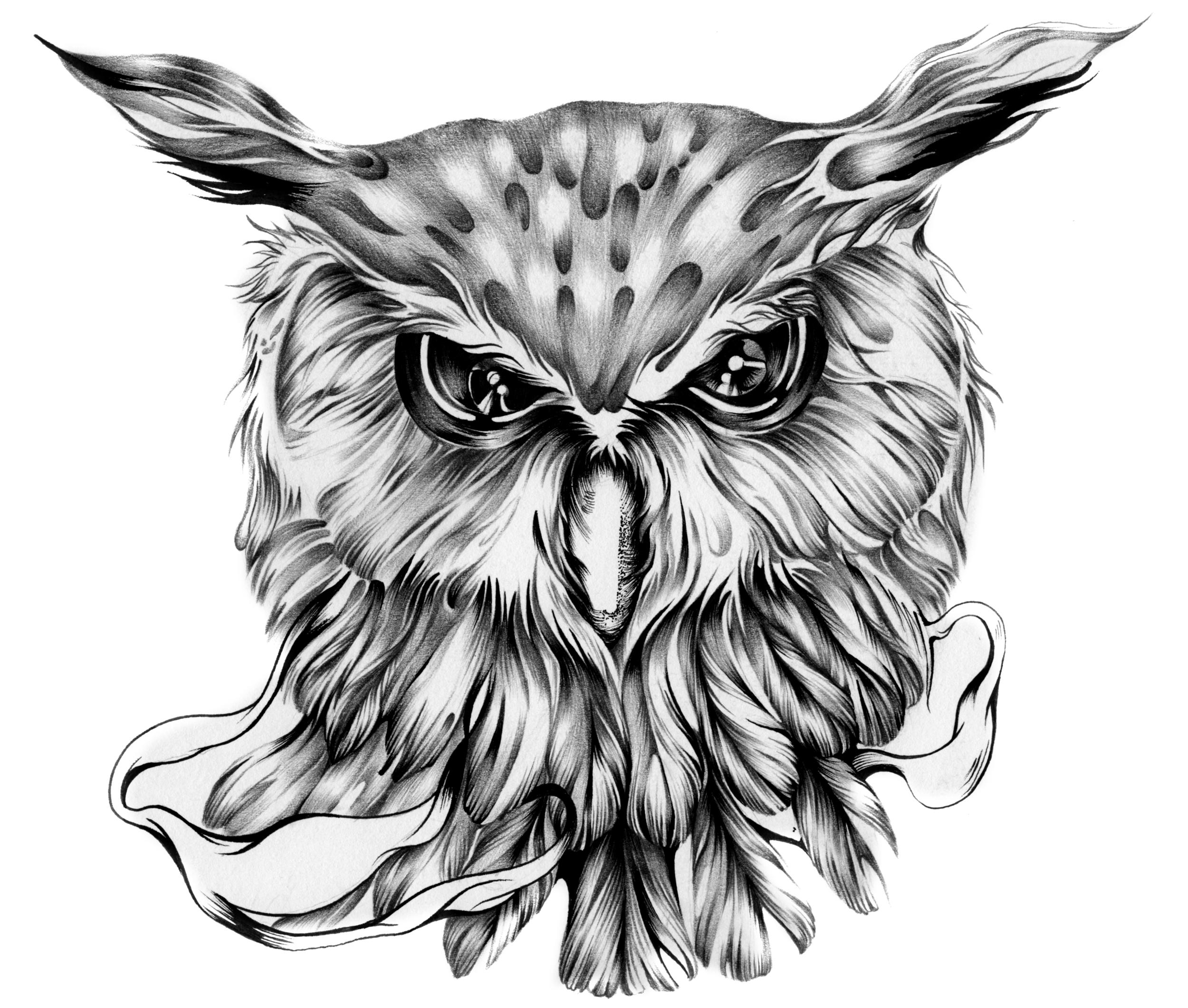 the owl 2013.jpg