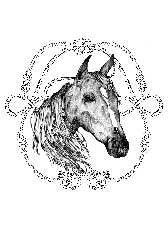 Horse_card.jpg