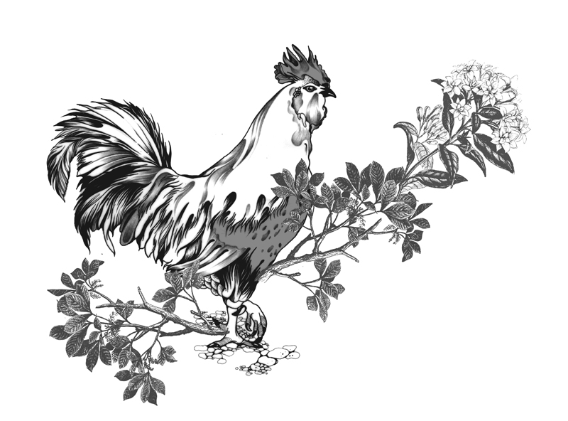 Pomme Chan_Rooster.jpg