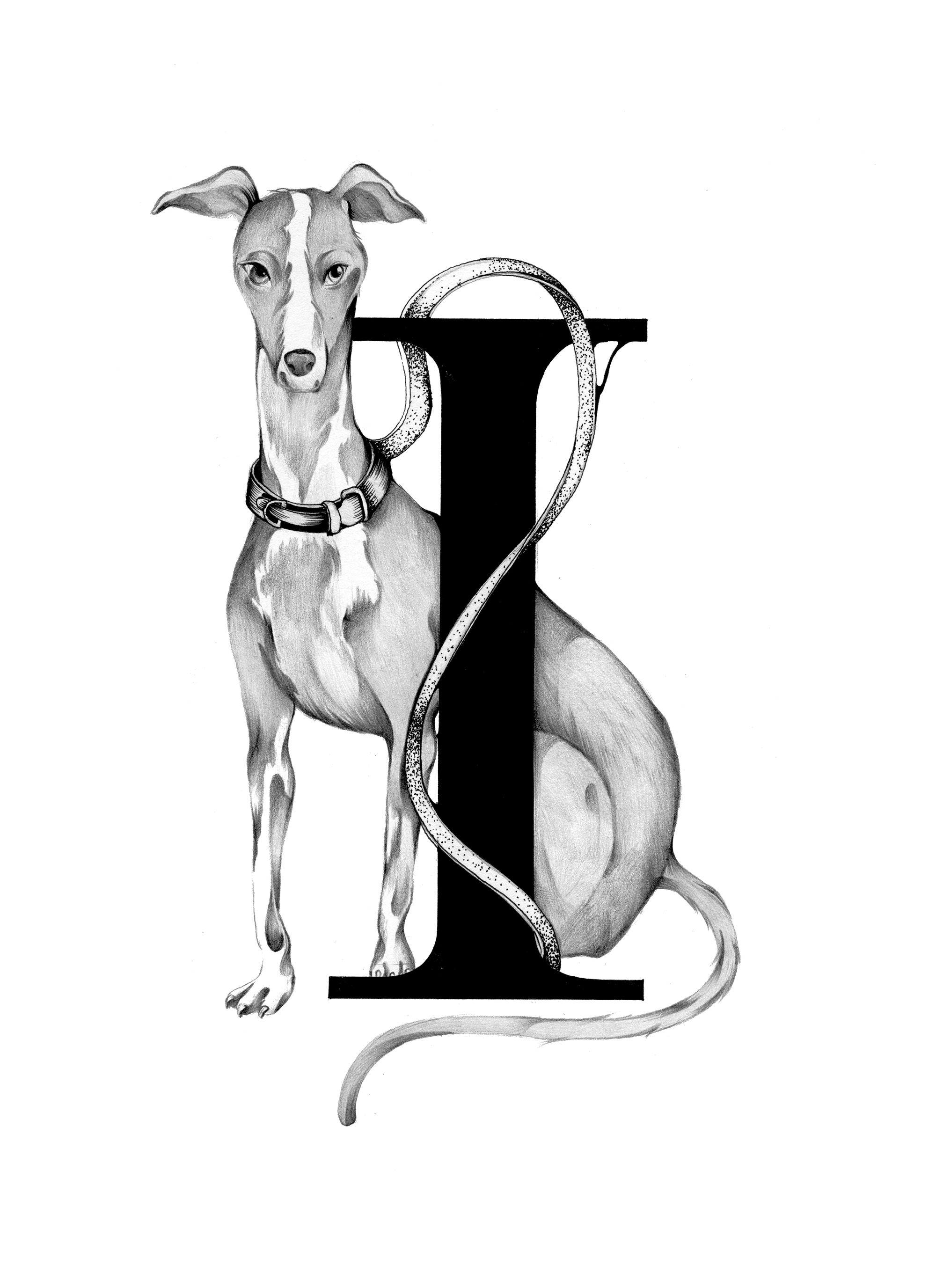 300 dpi-I Italian Greyhound.jpg