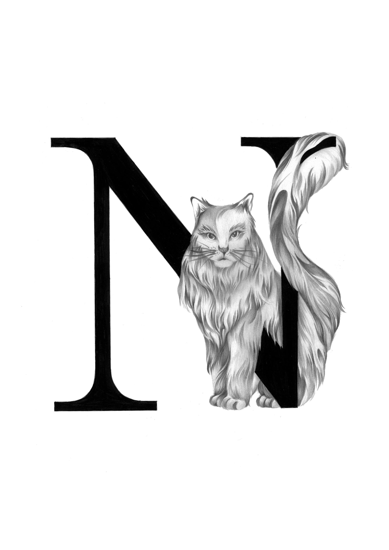 300 dpi-N Norwegian cat.jpg