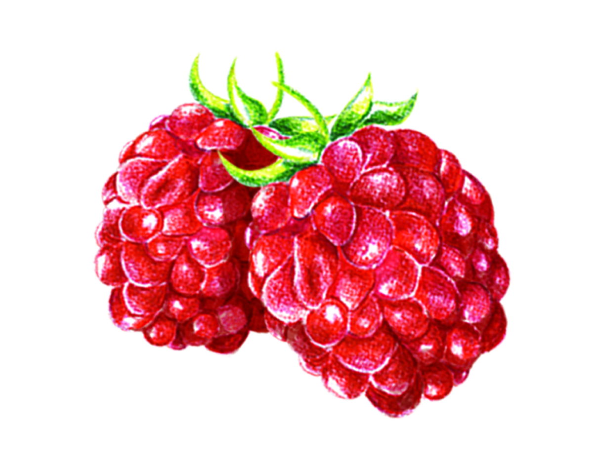 rasberry.jpg