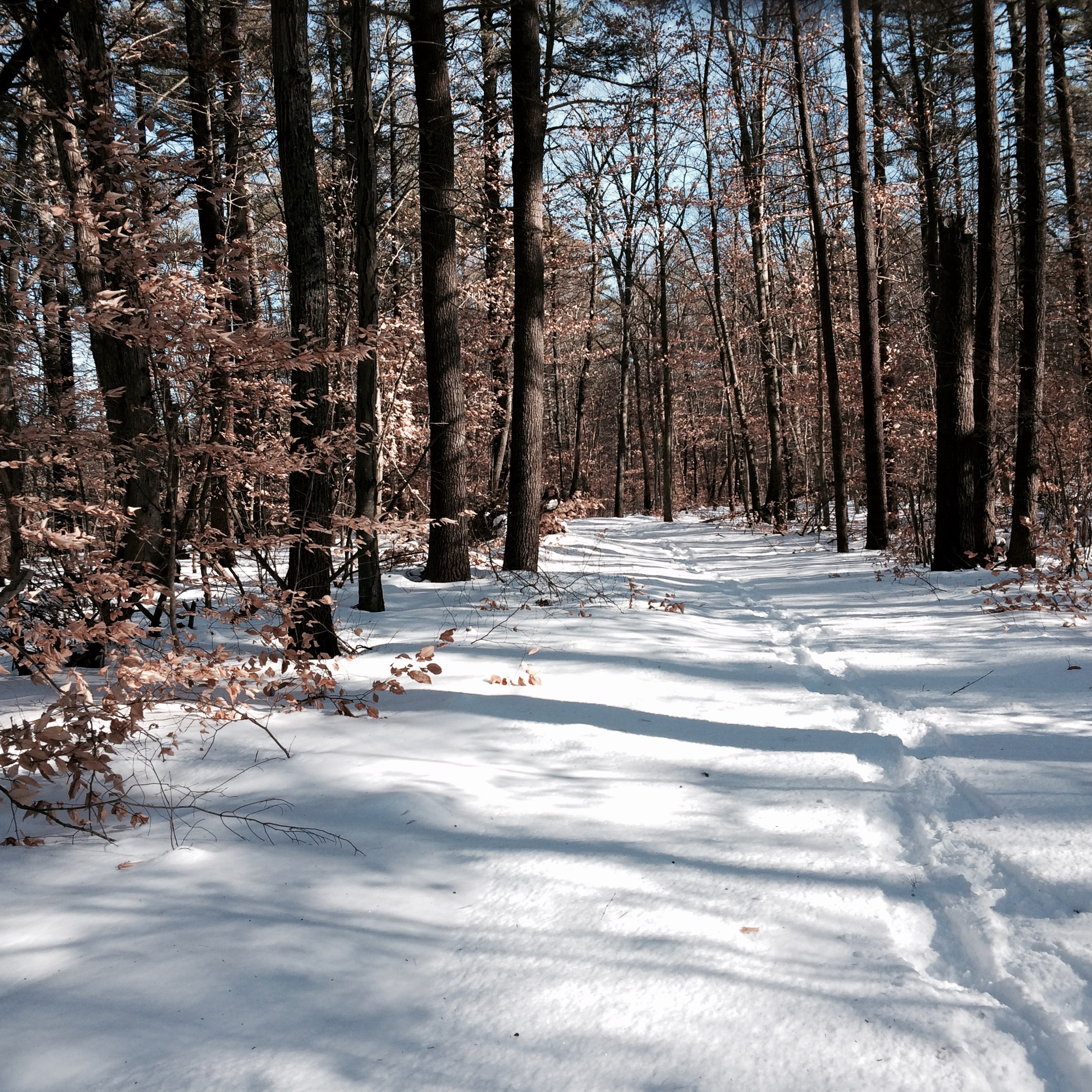 "I find this trail so peaceful. For my regular readers... ""my"" wood frogs are frozen solid, hiding under leaves and logs all through these woods."
