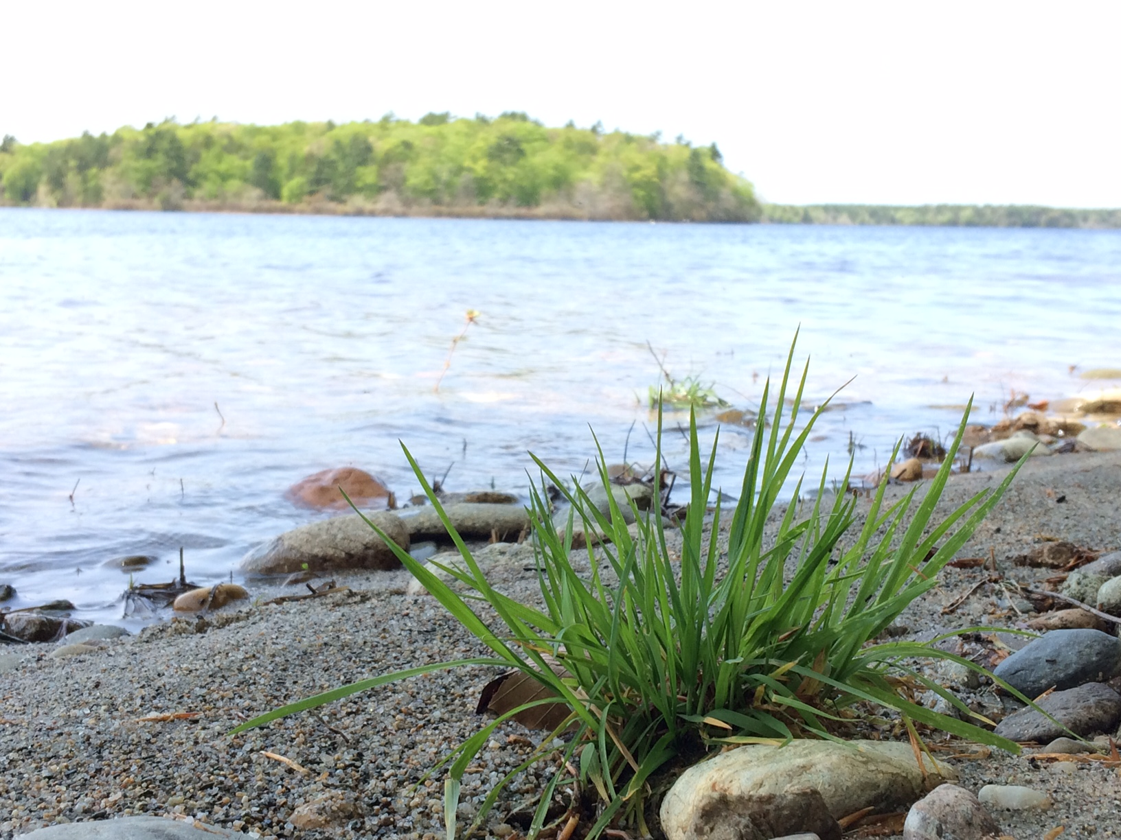 grass.lake