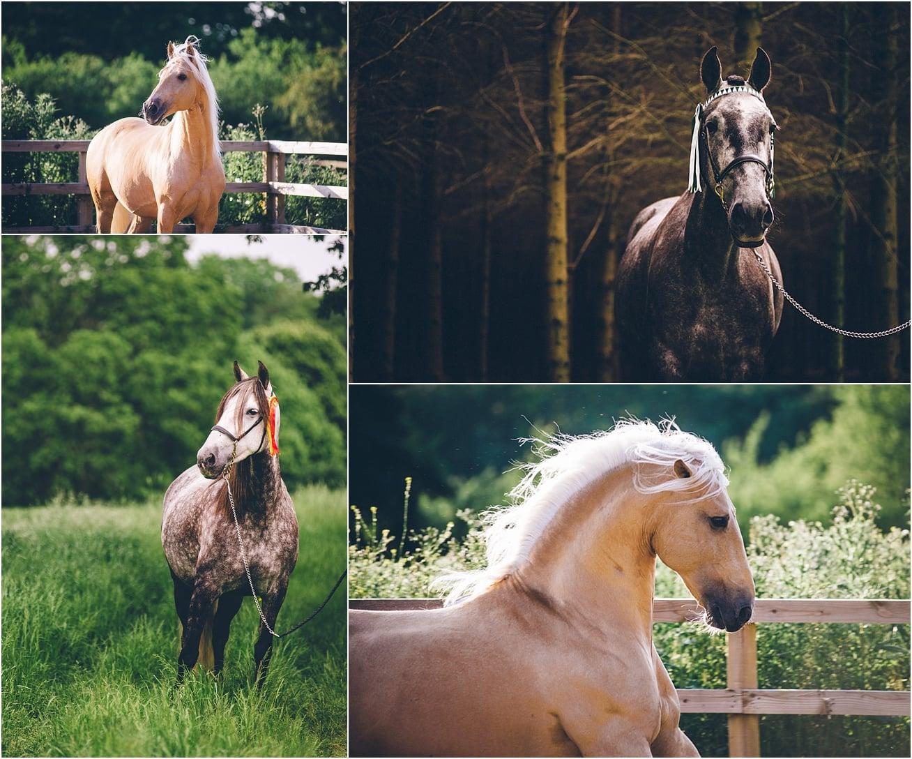 Horse photographer kent, surrey, sussex, essex, london, UK