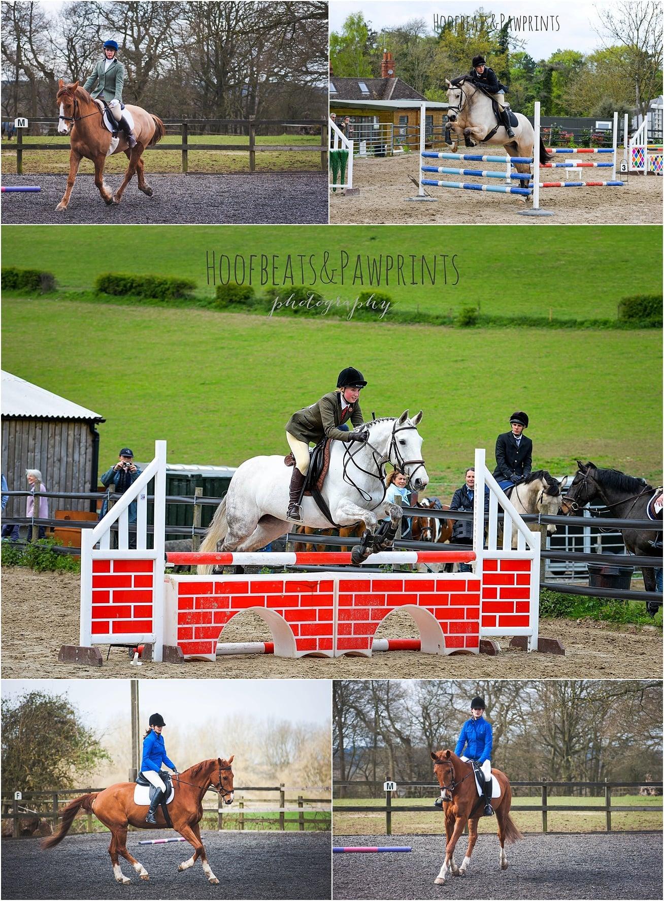 Horse photographer, kent, surrey, sussex, essex, london, UK