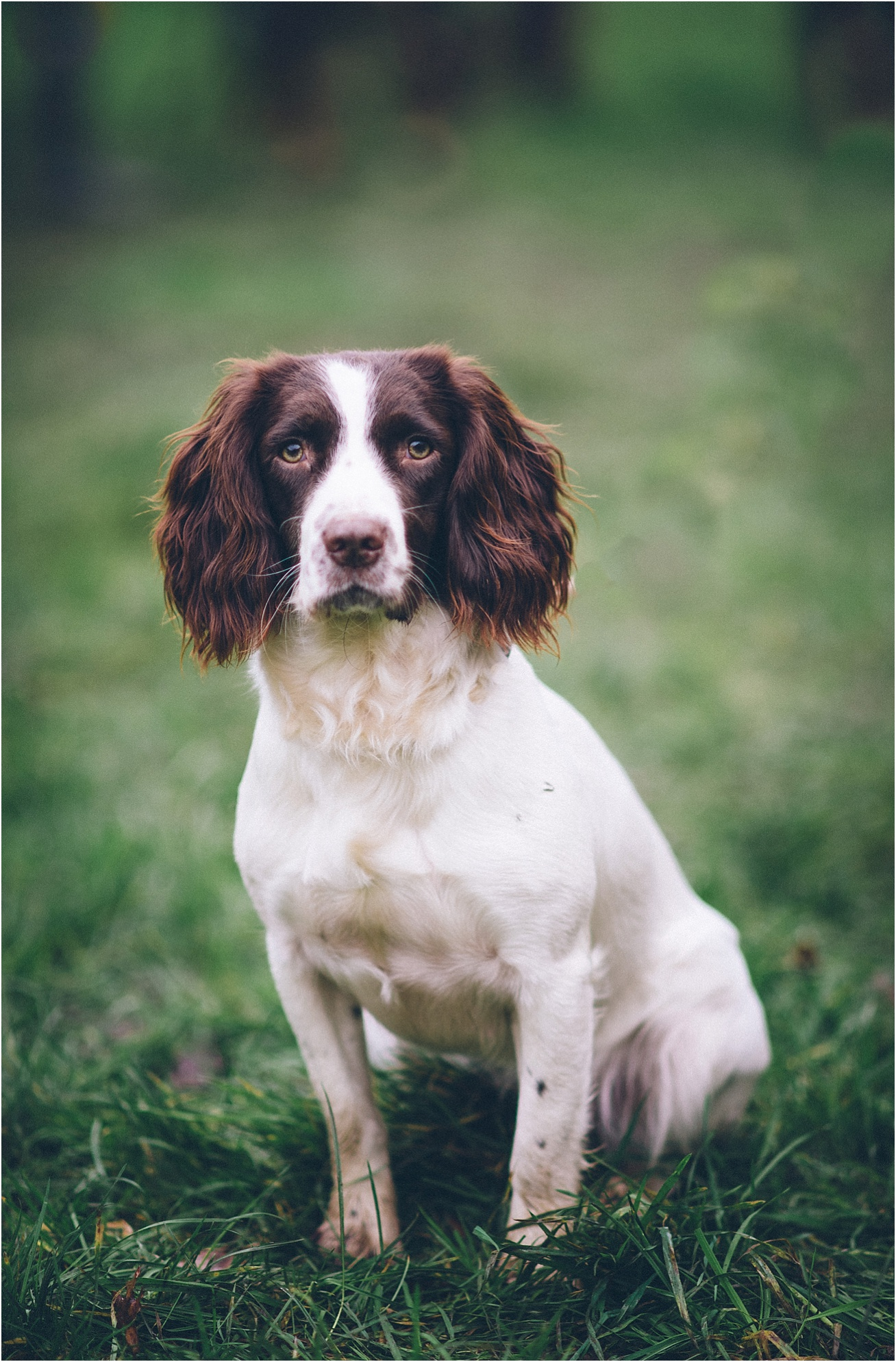 dog photographer london