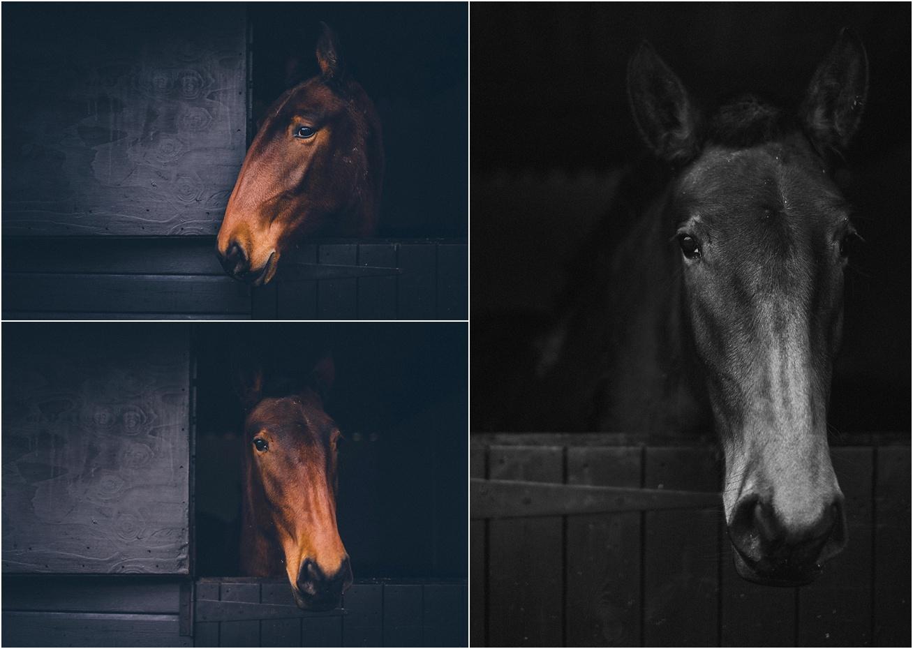 horse photographer surrey