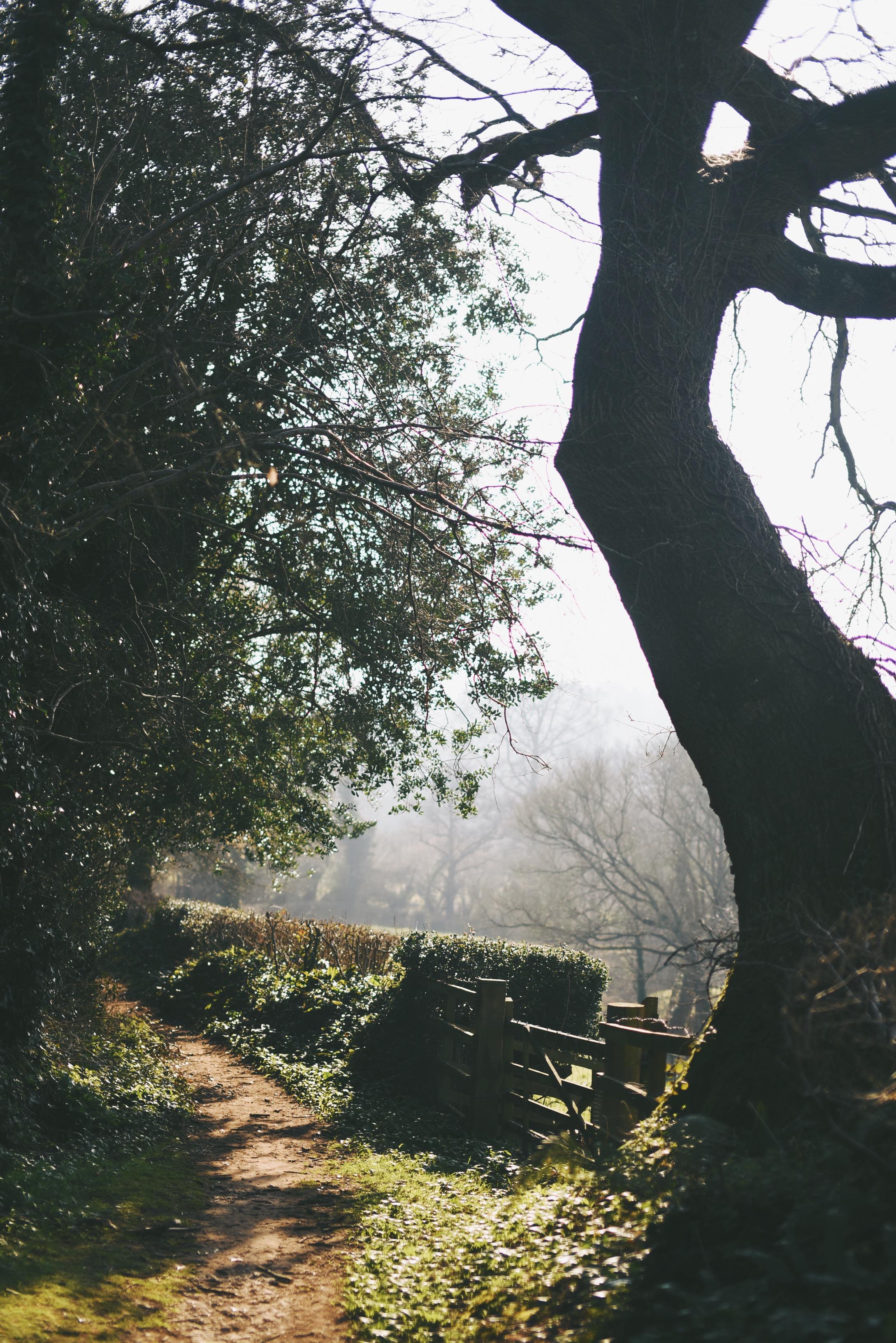 devon woodland