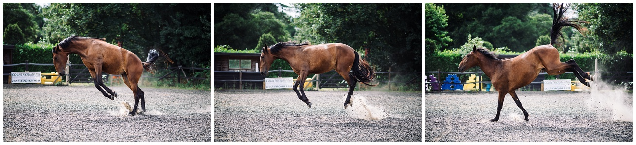 Horse photographer in devon, cornwall and somerset