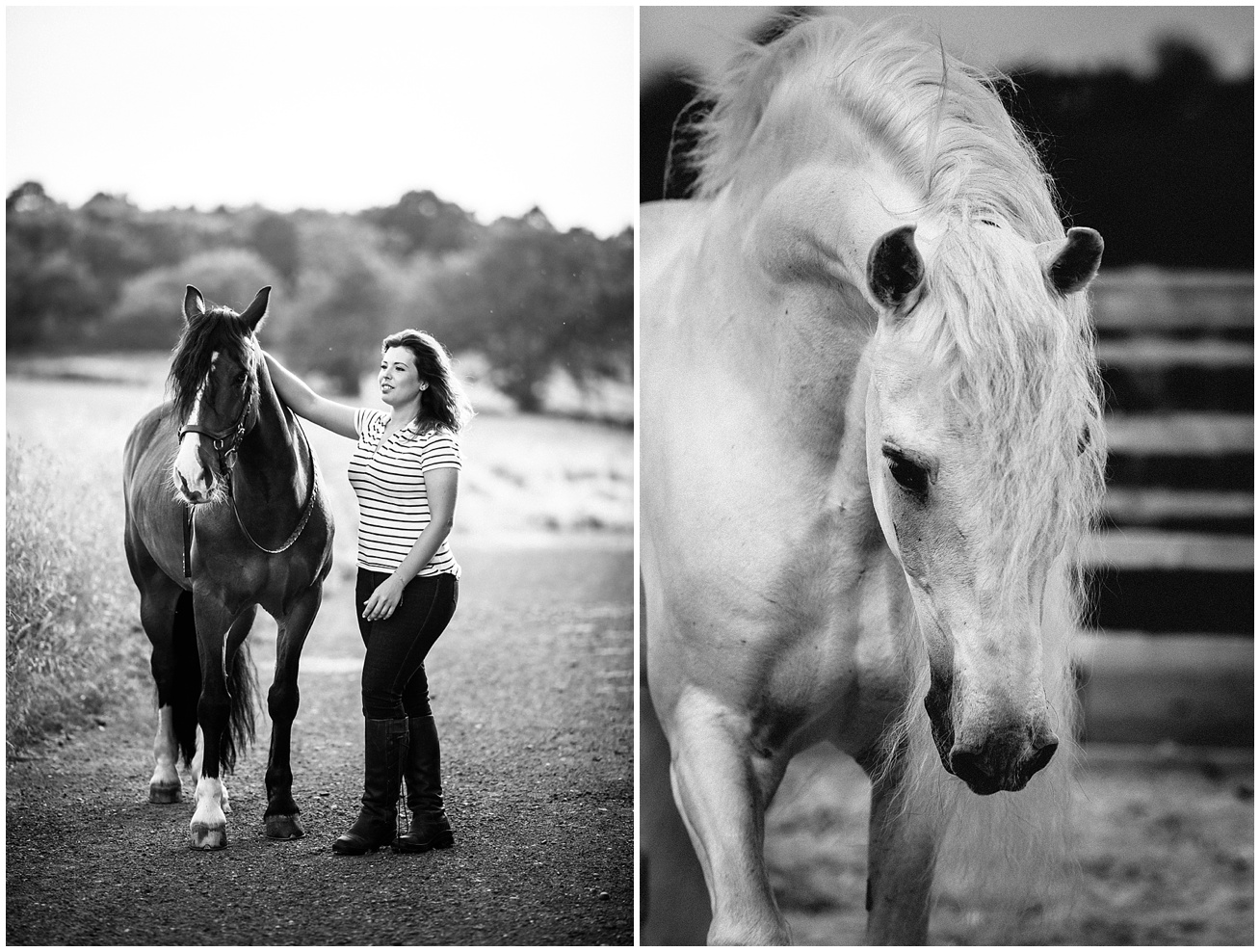 Horse Photographer in the UK