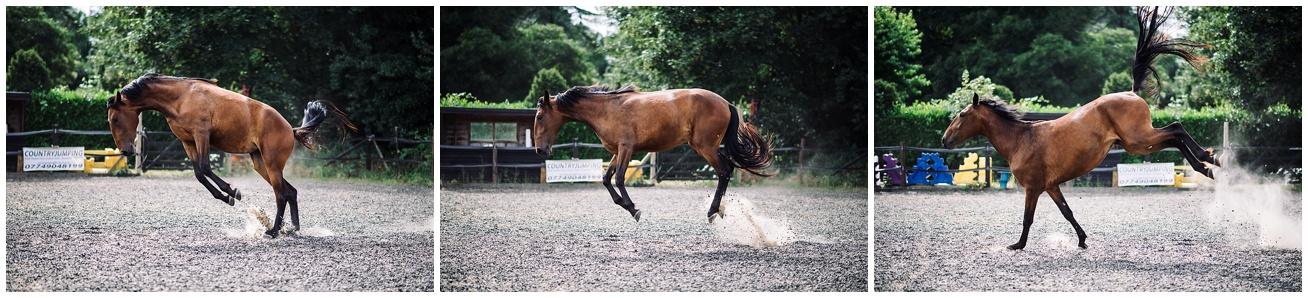 horse photographer devon