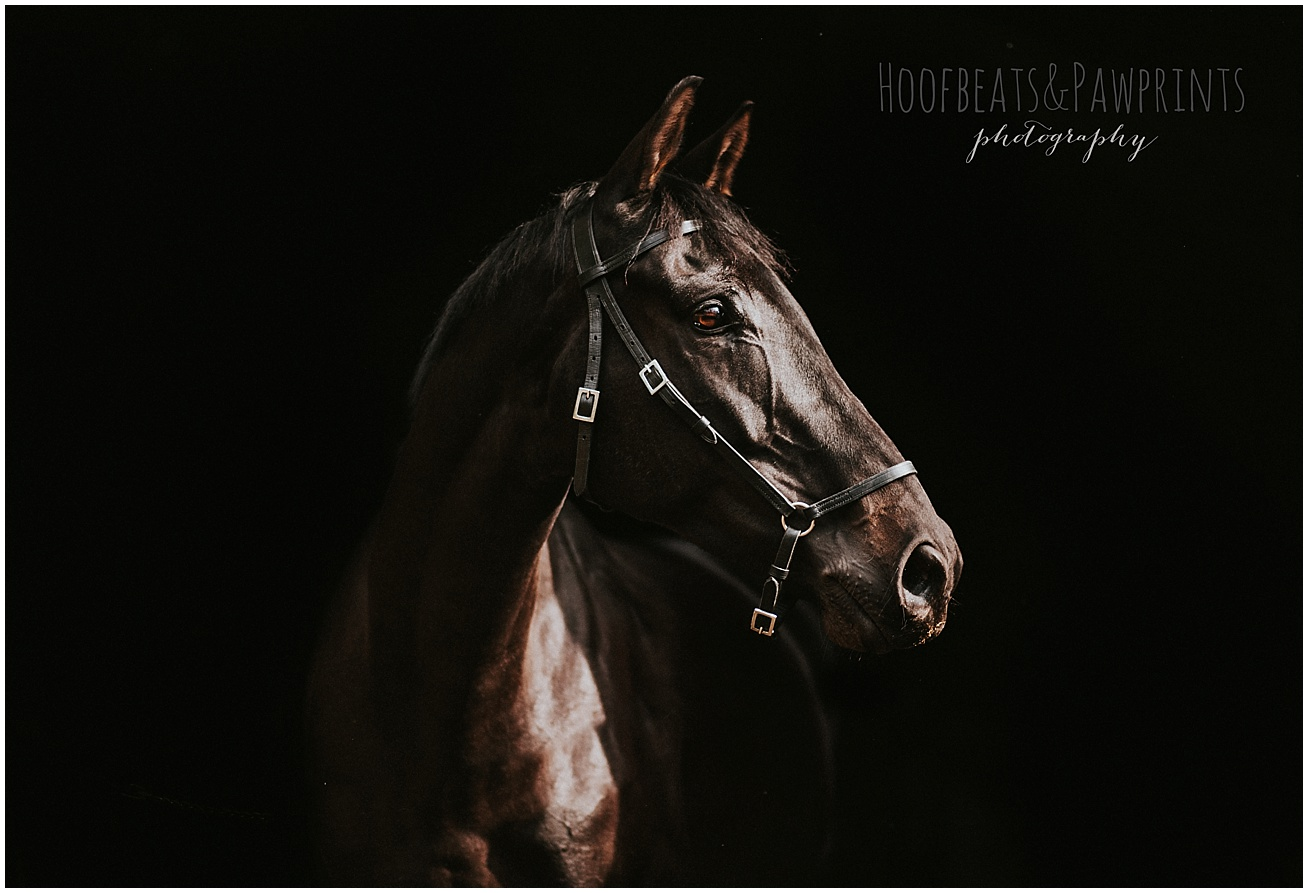 horse photographer uk