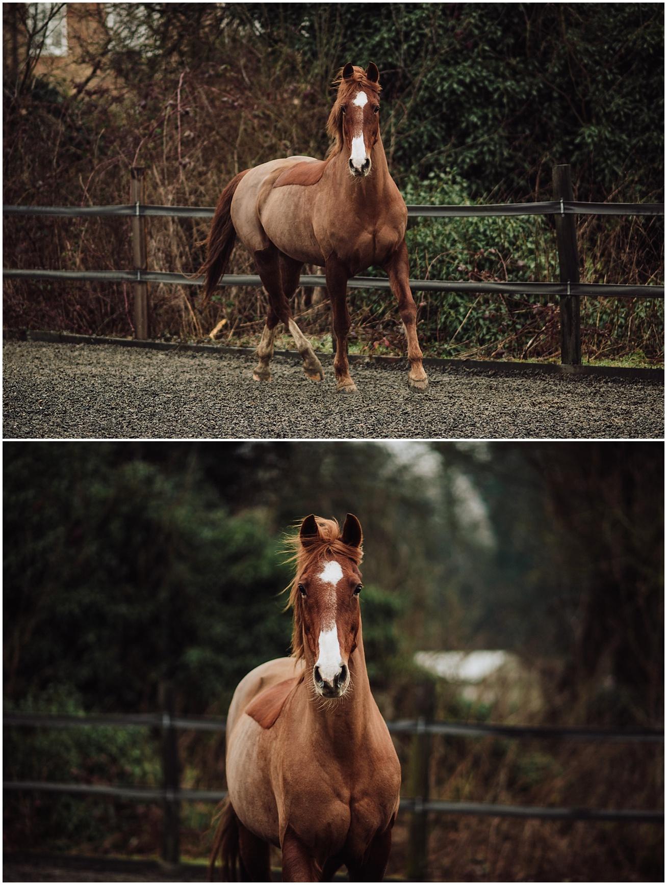 horse photo shoot kent