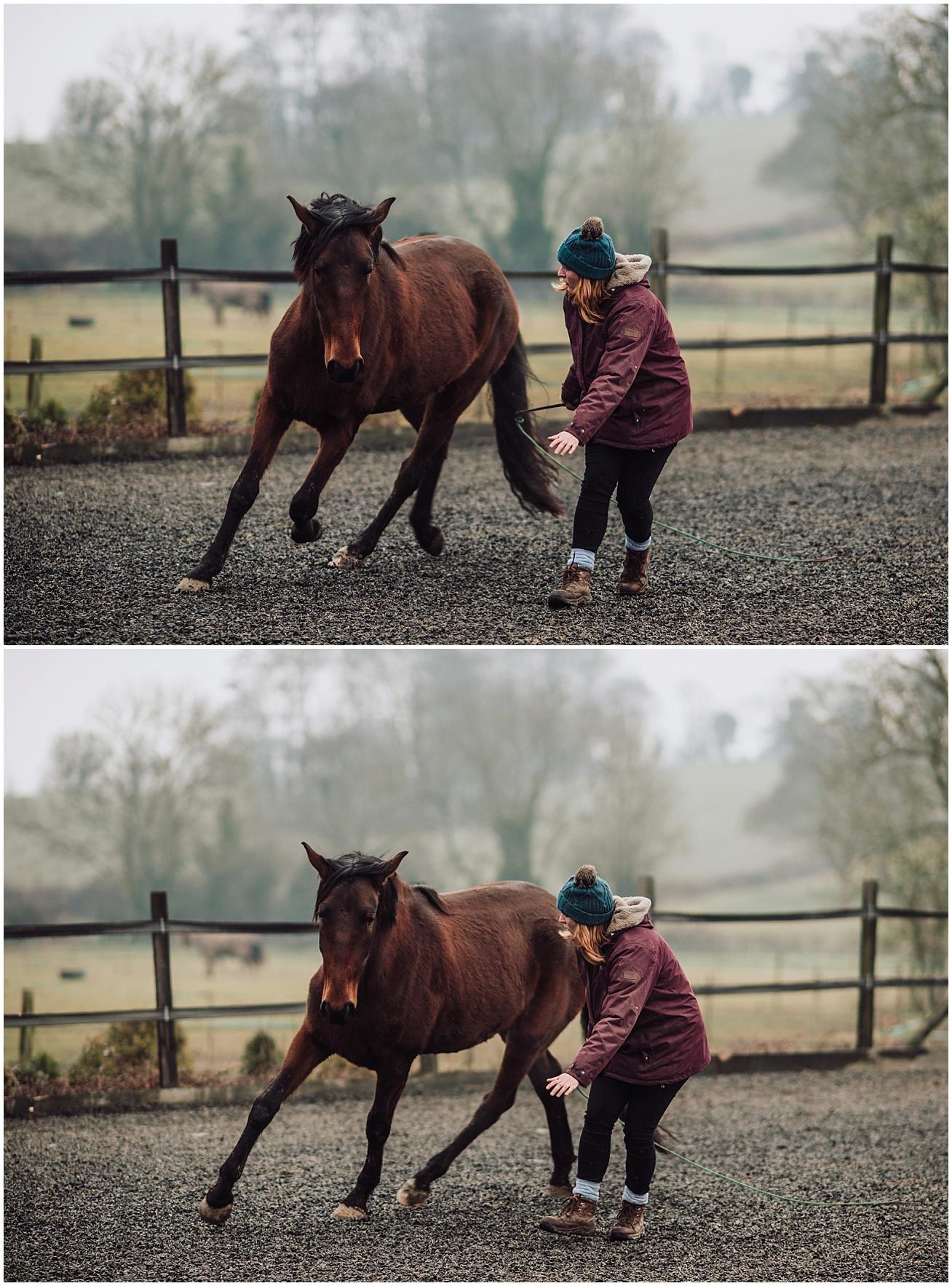 horse photographer in surrey