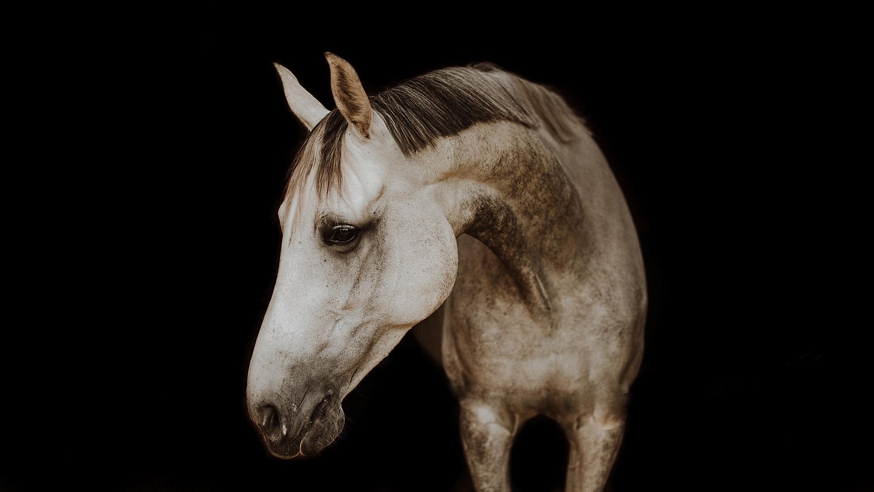 Horse photographer in kent, surrey, london