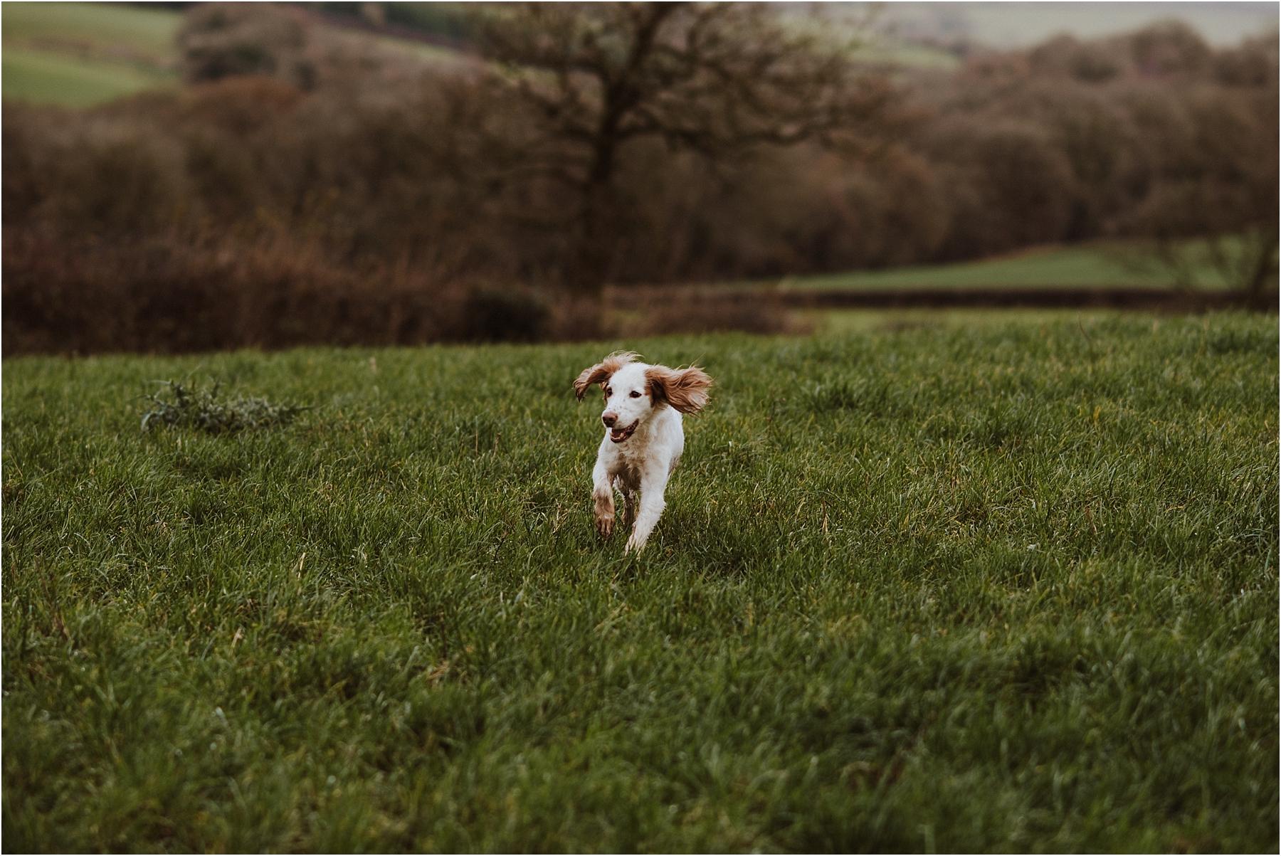 Dog photographer in london