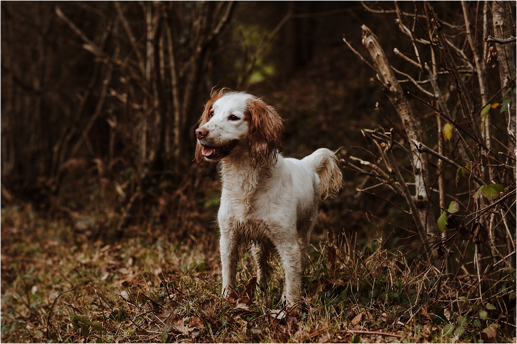 dog portrait photographer