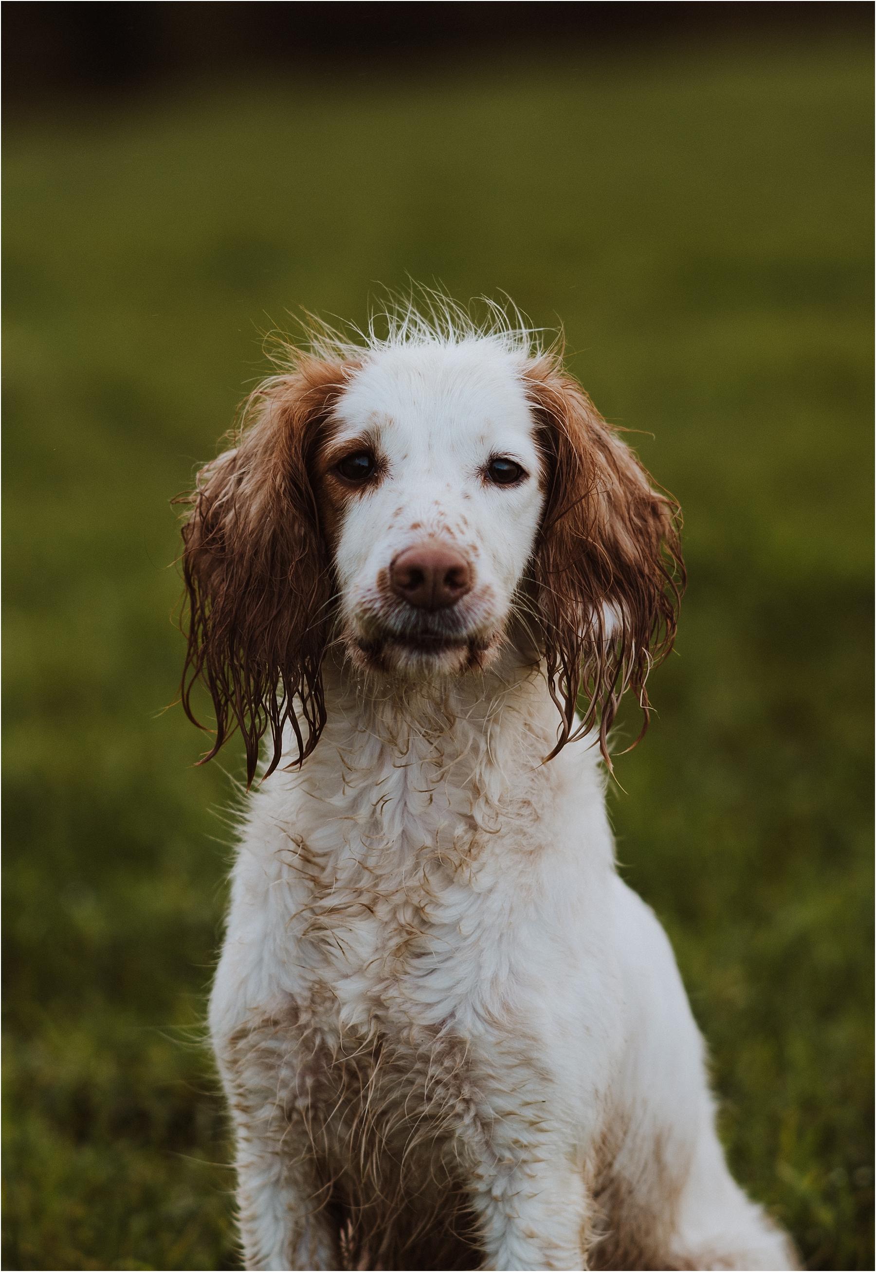 dog portrait photographer in london