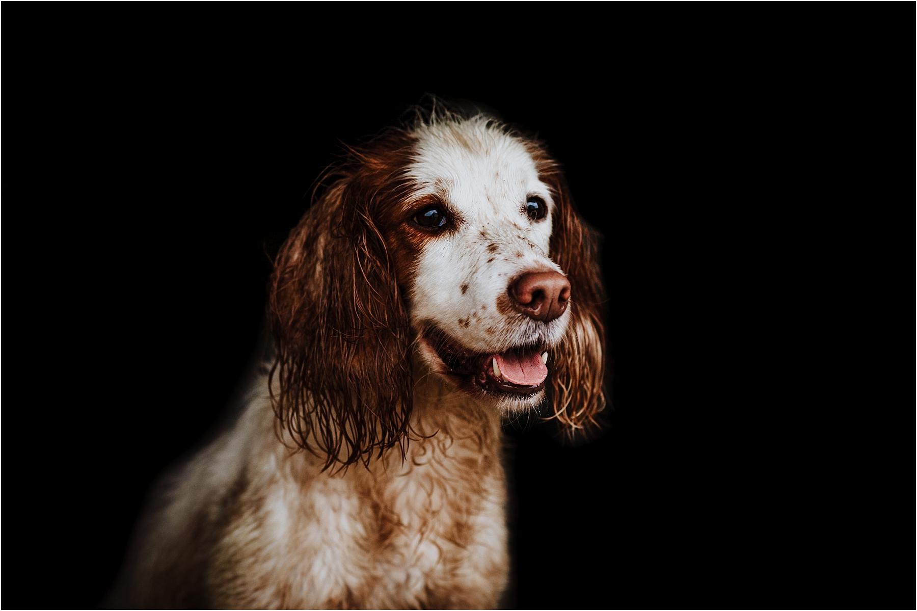 fine art dog photos