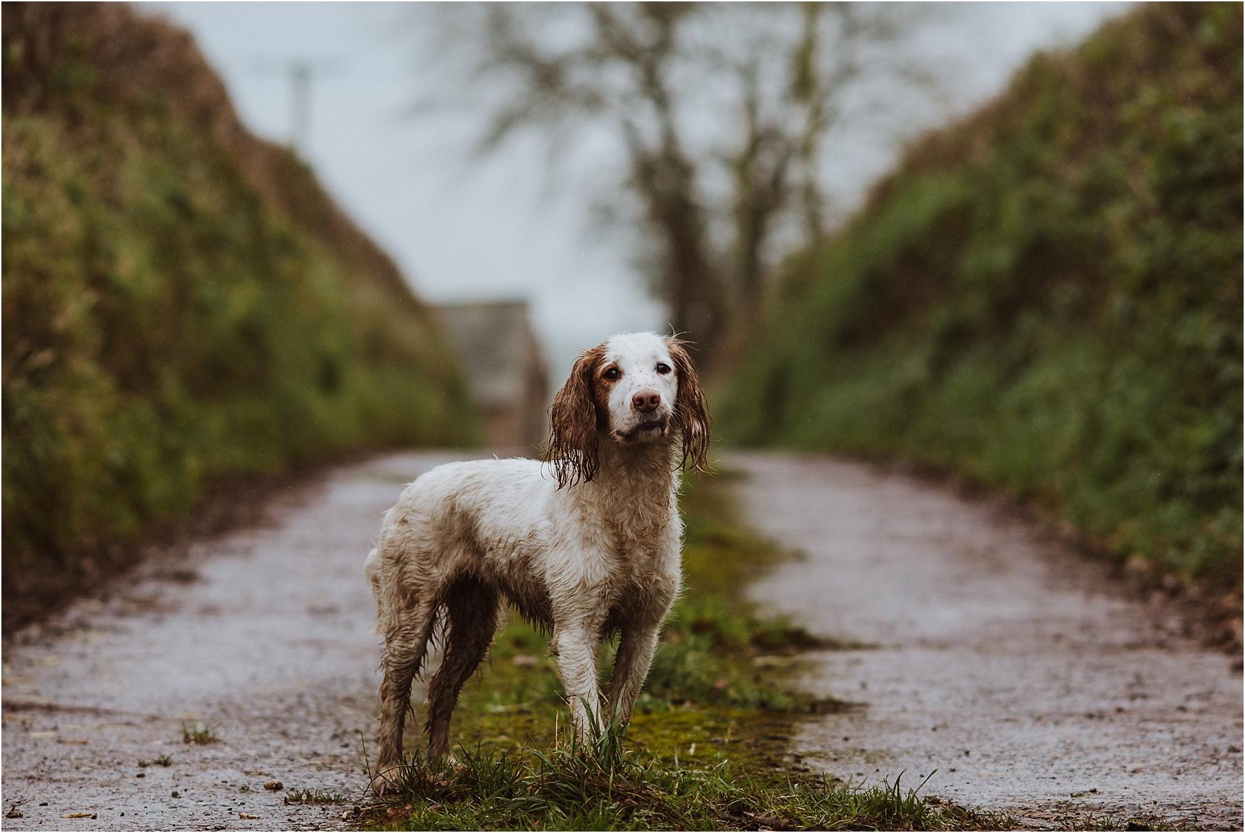 amazing dog photographer